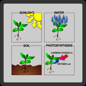 Plant Life Cycle Phases - Phase Two ( Sprouts and Roots ) ]